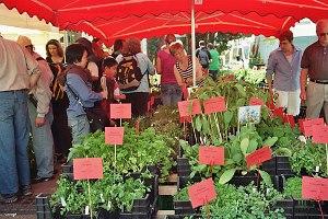 Bio-Gemüse am Tag der Erde