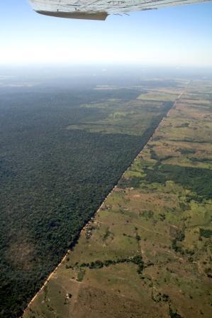 Regenwald-Projekt Florestal-Santa-Maria