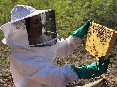 Honig aus Söhrewald