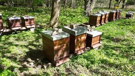 Honig aus dem Söhrewald